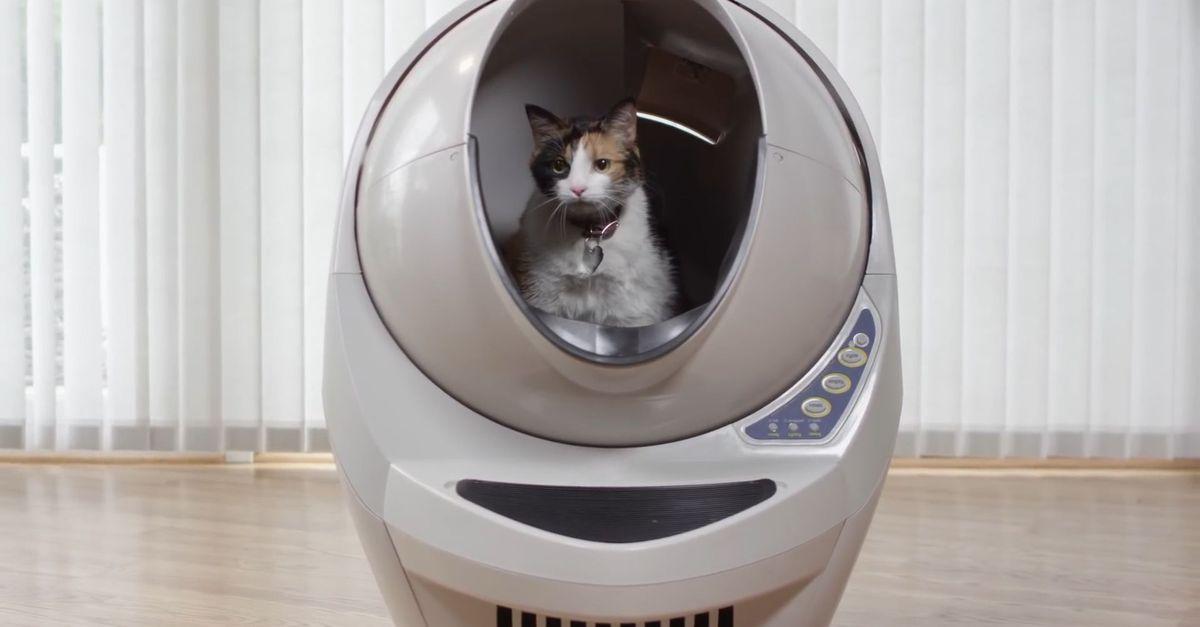 5 Tips on Choosing the Right Cat Litter Box