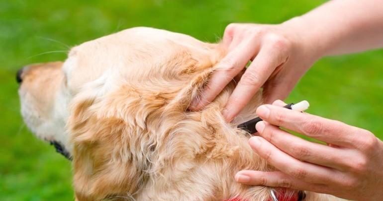 tick-borne-diseases